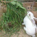Kanit Siiri ja Hilma ruokailemassa