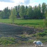 Nelli-koira lenkillä