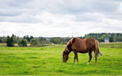 Kylämäen hevostila