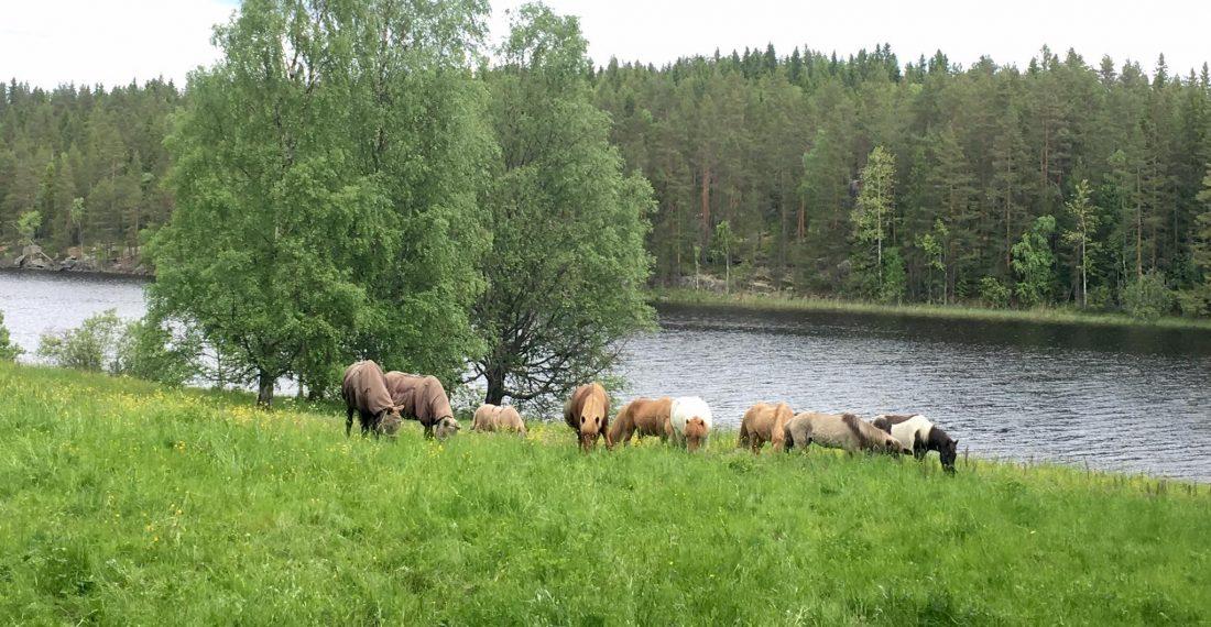 Purola Farm